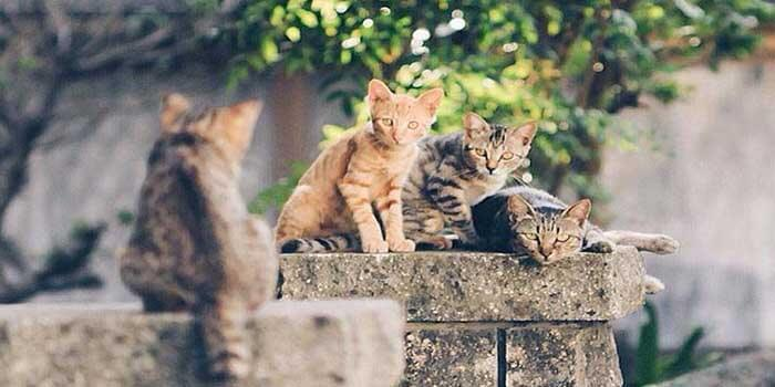 The Ultimate Cat Rule; Japan's Cat Island A Unique Place To Visit