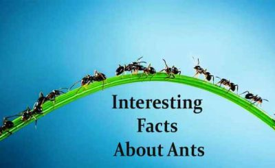 What You Need to Know about Ants