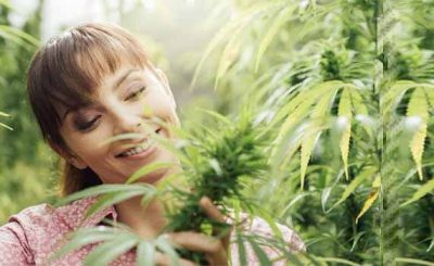 8 Best Marijuana Strains for Mood Disorders
