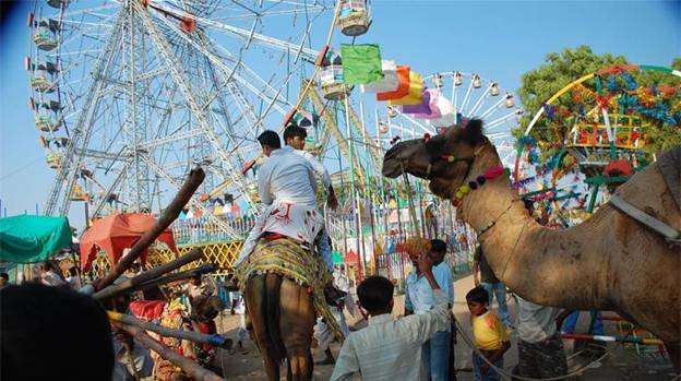 Pushkar Fair,  Festival of Cattle 7 days celebration