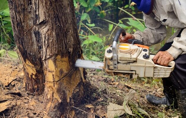 Essential Things to Know About a Tree Removal Service in North Sydney