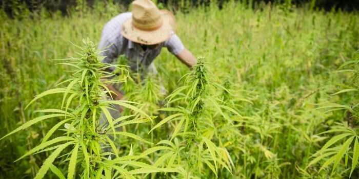 How To Earn Money From Hemp