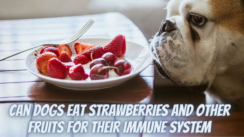 Can Dogs Eat Strawberries and Other Fruits for Their Immune System