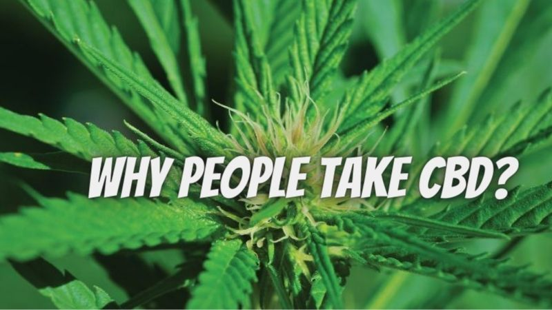 Why People Take CBD? Know here reasons