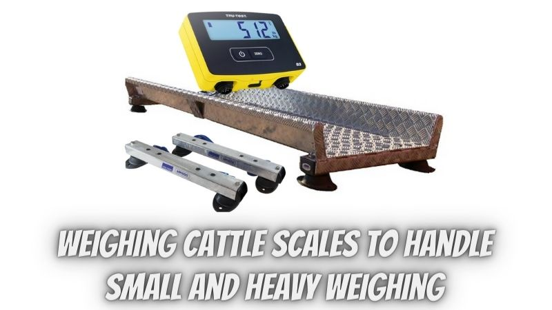 Why should you choose weighing cattle scales to handle small and heavy weighing?